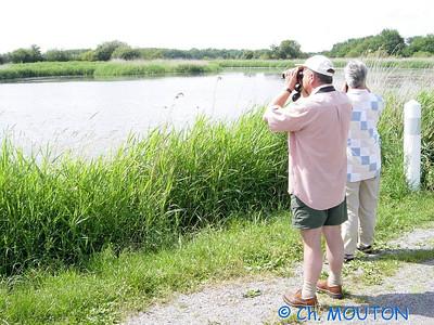 Brenne Bird Watching 04 C-Mouton