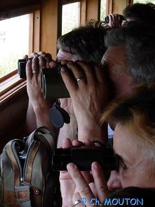 Brenne Bird Watching 05 C-Mouton