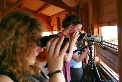 Observation Brenne 4662 C-Mouton