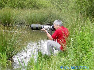 Nature Photographe 1 C-Mouton