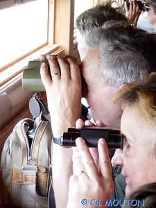Brenne Bird Watching 06 C-Mouton