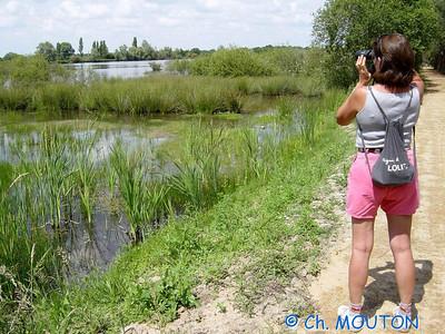 Brenne Bird Watching 03 C-Mouton