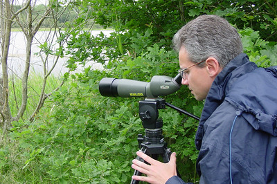 Nature Observation 1 C-Mouton