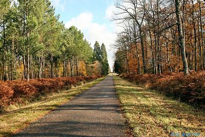 Route 4025 C-Mouton