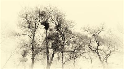 Ramures hivernales
