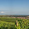 La plaine d'Alsace vue depuis Wolxheim
