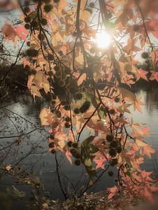 L'automne au bord de l'Ill