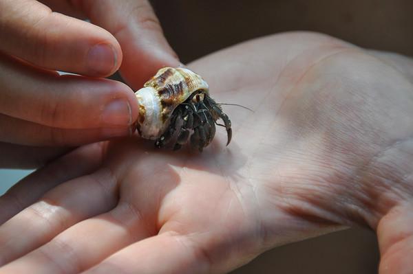 Hermit Crab, Nicoya Peninsula, Costa Rica