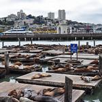 Pier 39 full of sea lions, San Francisco, California, USA