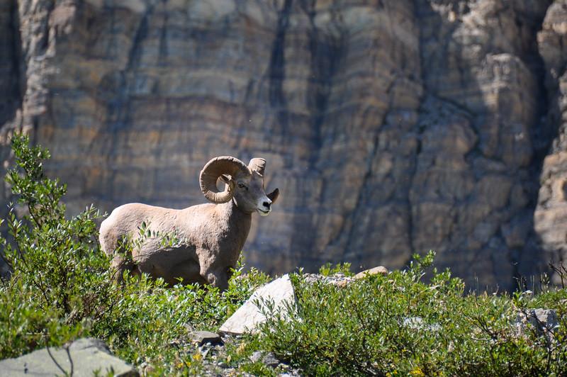 WIldlife as seen in Glacier National Park, Montana, USA