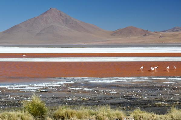 Laguna Colorada, Sur Lipez, South Bolivia