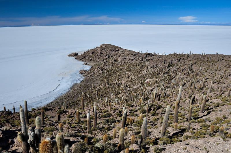 Isla Incahuasi (Pescadores), Salar de Uyuni, Bolivia