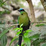 Barranquero bird at the zoo, Cali, Colombia