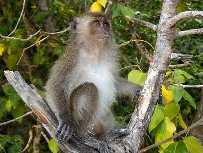 Monkey beach in Koh Phi Phi, Thailand