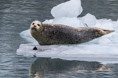 A harbor seal checking us out as we slowly cruise on by.