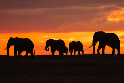 Elephant Family at Sunset, Amboseli NP, Kenya