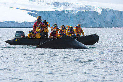 Humpback Whale Encounter off Yankee Harbour,Greenwich Island, Antarctica