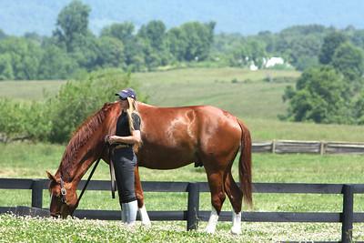 2014 Northern Virginia Equine Scene