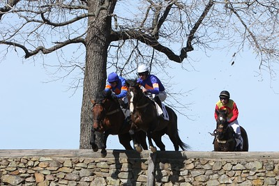 2015 Northern Virginia Equine Scene