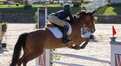 2016 Northern Virginia Equine Scene