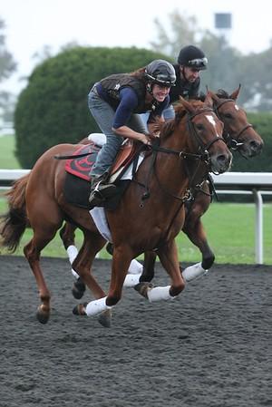 Lexington, Kentucky, Equine Scene