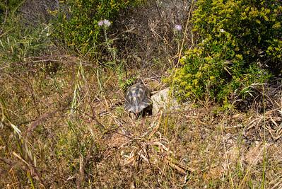 Häufig können die Schildkröten sonnenbadend in der Nähe ihres Versteckplatzes beobachtet werden.