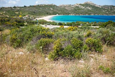 Das relativ kleine Habitat der Breitrandschildkröte liegt unweit touristischer Einrichtungen.
