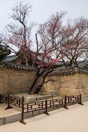 20170325 Changdeokgung Palace 035