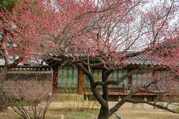 20170325 Changdeokgung Palace 036