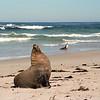 Seal Bay Conversation Park, Kangaroo Island, South Australia, Australia