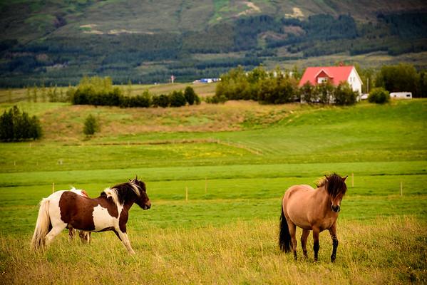 20180824-31 Iceland 365