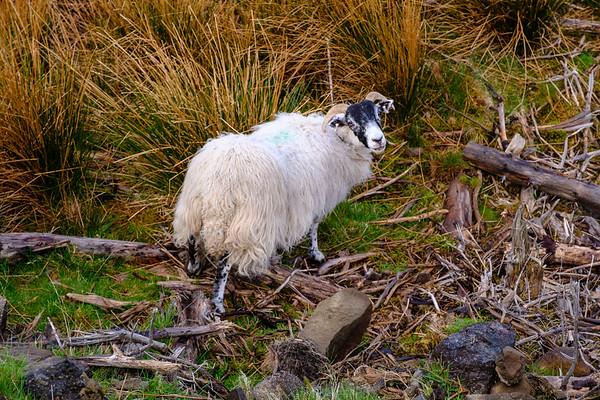 20190506 Isle of Skye 294