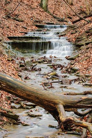 20061231 Cox Arboretum 038