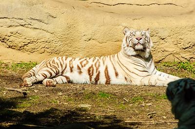 20070421 Cincinnati Zoo 071