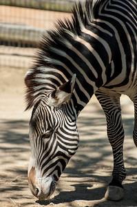 20070421 Cincinnati Zoo 101