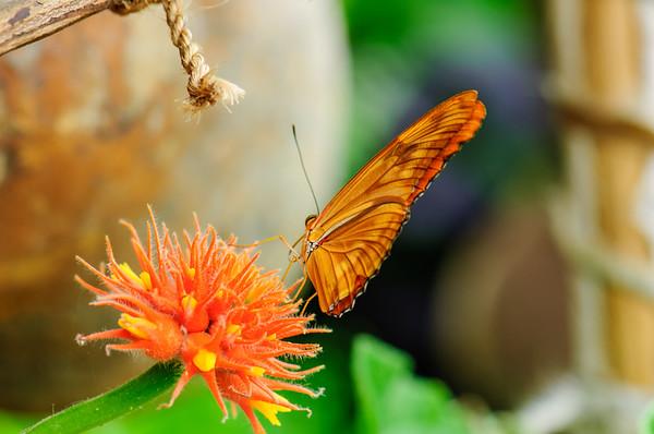 20070519 Krohn Butterflies 046