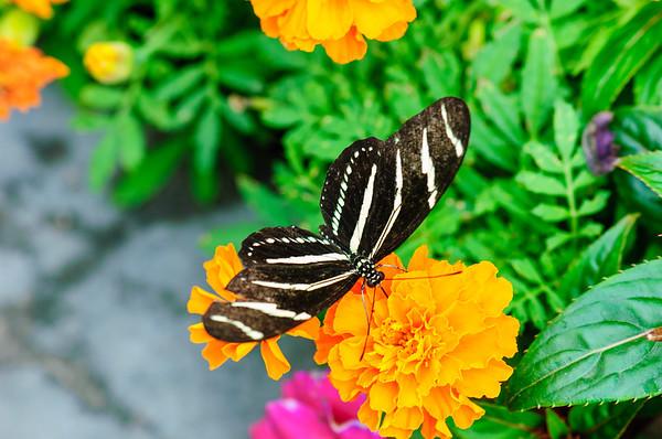 20070519 Krohn Butterflies 090