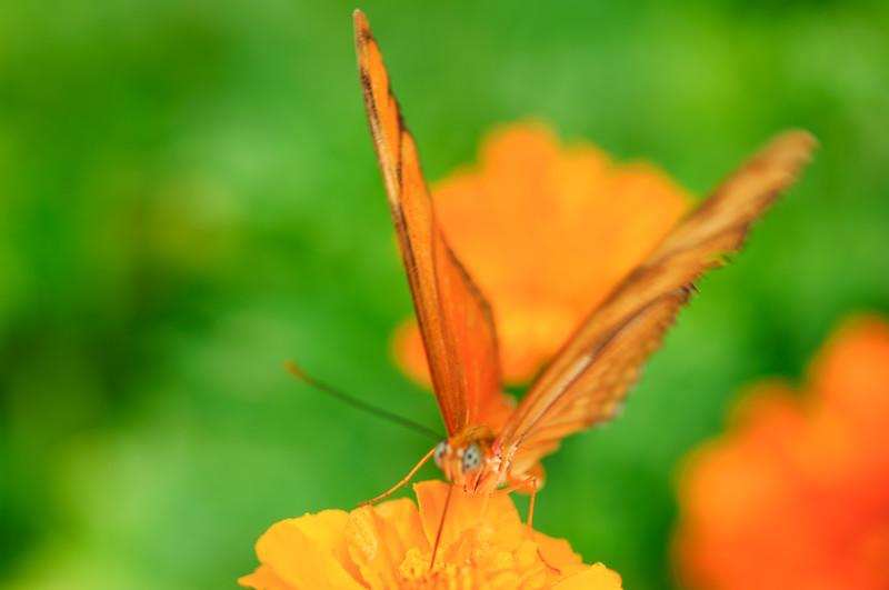 20070519 Krohn Butterflies 004