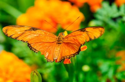 20070519 Krohn Butterflies 055