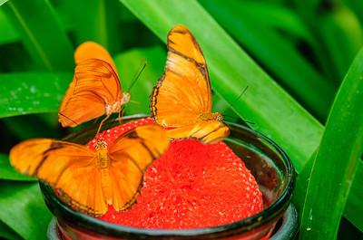 20070519 Krohn Butterflies 119