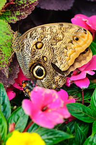 20070519 Krohn Butterflies 082