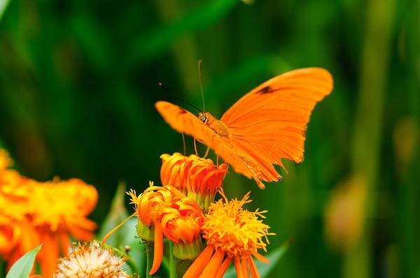 20070519 Krohn Butterflies 039