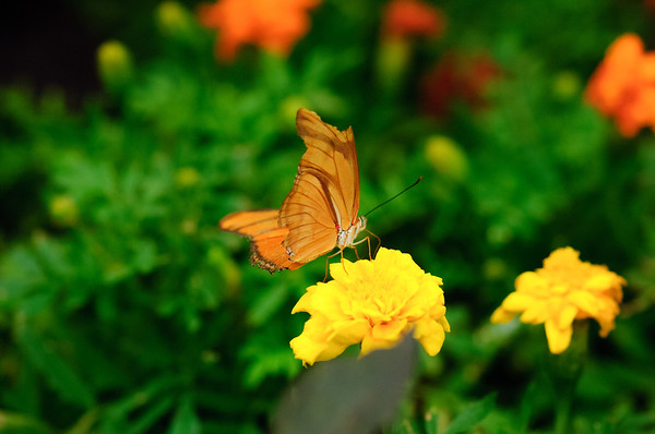 20070519 Krohn Butterflies 001