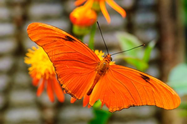 20070519 Krohn Butterflies 040