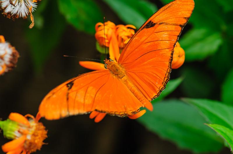 20070519 Krohn Butterflies 028