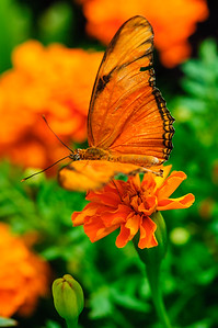 20070519 Krohn Butterflies 060