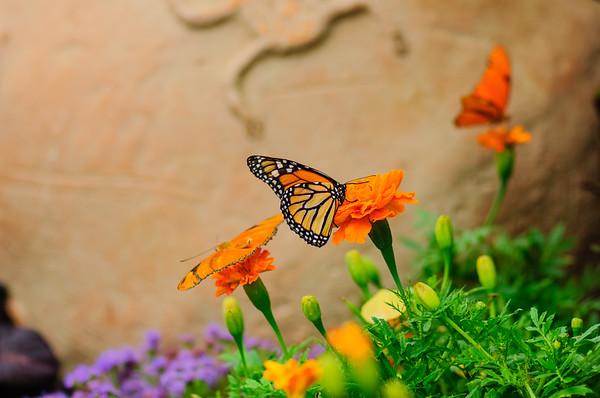 20070519 Krohn Butterflies 019