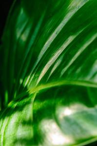 20080301 Franklin Park Conservatory 024