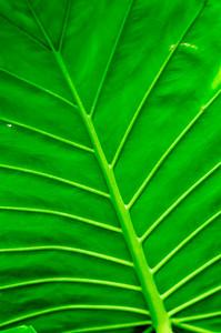 20080301 Franklin Park Conservatory 022
