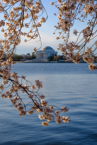 20180408 DC Cherry Blossoms 025